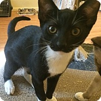 Adopt A Pet :: RyanA - North Highlands, CA