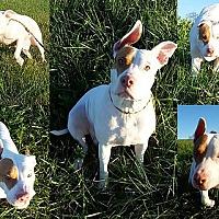 Adopt A Pet :: Rosie - Staunton, VA