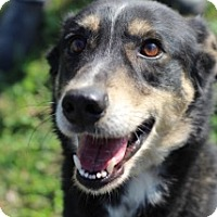 Adopt A Pet :: Tater - Von Ormy, TX