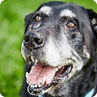 Adopt A Pet :: Meka - Petaluma, CA