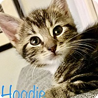Adopt A Pet :: Hootie - Island Park, NY