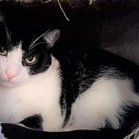 Adopt A Pet :: Natalia - Encinitas, CA