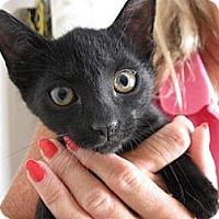 Adopt A Pet :: Penny - Ft. Lauderdale, FL