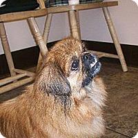 Adopt A Pet :: Muggles - Richmond, VA