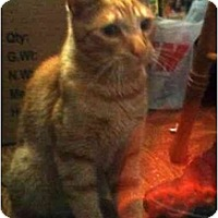 Adopt A Pet :: Shimmy - Jenkintown, PA