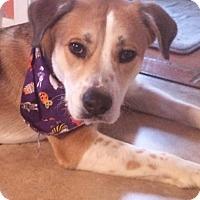 Adopt A Pet :: ROCKY - MILWAUKEE, WI