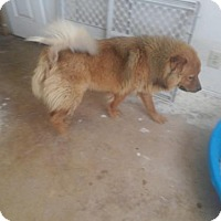Adopt A Pet :: Maria - San Antonio, TX