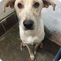 Adopt A Pet :: Tara - Pompton Lakes, NJ
