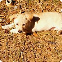 Adopt A Pet :: Reilly - San Antonio, TX