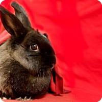 Adopt A Pet :: Azalea - Voorhees, NJ