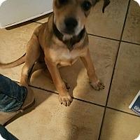 Adopt A Pet :: Frida - LAKEWOOD, CA