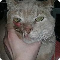 Adopt A Pet :: Phantom - Syracuse, NY