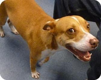 Basenji Mix Dog for adoption in Gainesville, Florida - Summer