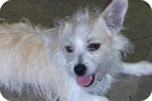 Border Terrier Mix Dog for adoption in Lockhart, Texas - Rascal