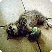 Adopt A Pet :: Ivy - Shavertown, PA