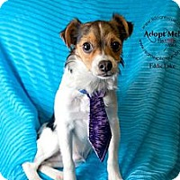 Adopt A Pet :: Eddie Lake - Shawnee Mission, KS
