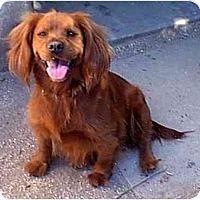 Adopt A Pet :: Sassy - dewey, AZ
