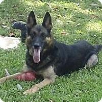Adopt A Pet :: Grace - Green Cove Springs, FL