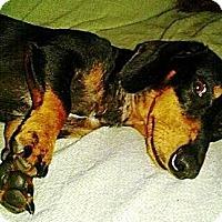 Adopt A Pet :: JAKE - Ridgewood, NY