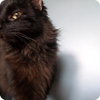 Adopt A Pet :: Luna - Lake Charles, LA