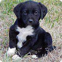 Adopt A Pet :: Queeny (5 lb) Video! - Burlington, VT