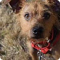 Adopt A Pet :: Clyde (Has Application) - Washington, DC