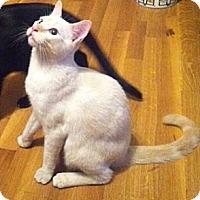 Adopt A Pet :: Phoebeious - Austin, TX