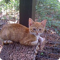 Adopt A Pet :: Lenni - Monroe, GA