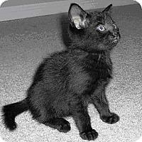 Adopt A Pet :: Spooky - Acme, PA