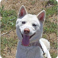 Adopt A Pet :: SeolHee - Southern California, CA