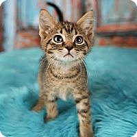 Adopt A Pet :: Foreigner - Eagan, MN