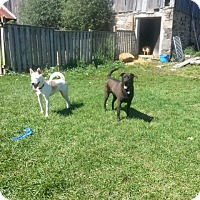 Adopt A Pet :: Belle - Northumberland, ON