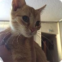 Adopt A Pet :: Peanut Butter - McDonough, GA