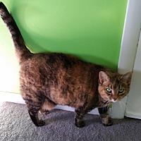 Adopt A Pet :: Attie - Carlisle, PA