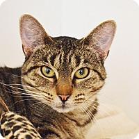 Adopt A Pet :: Petunia - Lincoln, NE