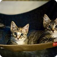 Adopt A Pet :: Twix - Los Angeles, CA