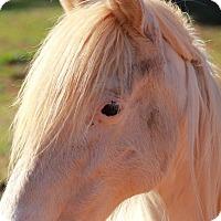 Adopt A Pet :: Princess - cumming, GA