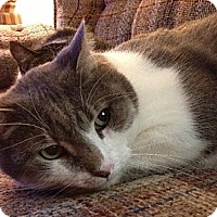 Adopt A Pet :: Mitchell - $25 Adoption Fee - Pekin, IL