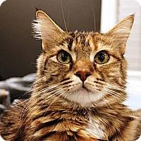 Adopt A Pet :: Holly - Irvine, CA