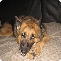 Adopt A Pet :: Benny - Green Cove Springs, FL