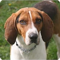 Adopt A Pet :: Bo - Harrisburgh, PA