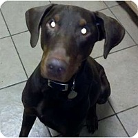 Adopt A Pet :: Gillis - New Richmond, OH