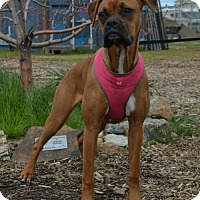 Adopt A Pet :: Sunshine - Yreka, CA