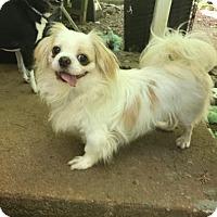 Adopt A Pet :: Pepe - Manchester, NH