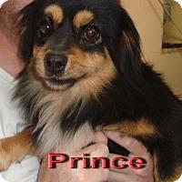 Adopt A Pet :: Prince - Coleman, TX