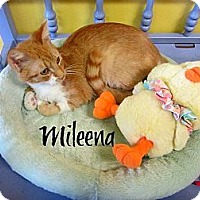 Adopt A Pet :: Mileena - Mobile, AL
