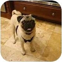 Adopt A Pet :: Salvadore - Windermere, FL
