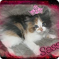 Adopt A Pet :: Sassy - Washington, DC