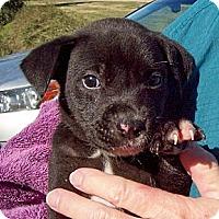 Adopt A Pet :: EMMA - Glastonbury, CT
