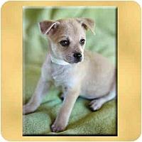 Adopt A Pet :: Opal - Scottsdale, AZ